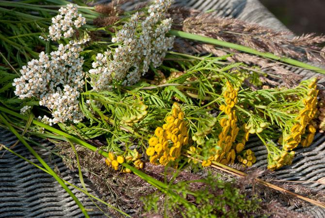 Blüten- und Samenstände