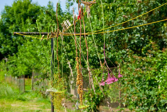 Pflanzenstängel an der Wäscheleine