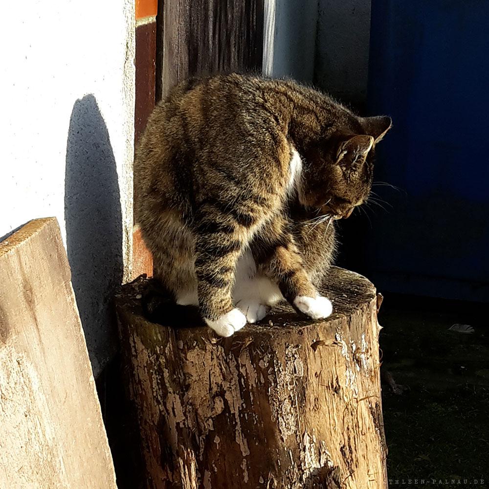 Meine Blegleiterin beim Stricken: Katze Frieda