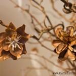 Zapfenblüten: Blumen aus Tannenzapfen