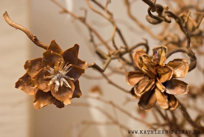 Fertige Zapfenblüten-Klammern