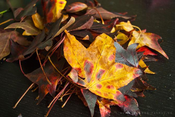 Herbstliche Amberbaumblätter