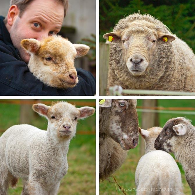 Schafe, Julian mit Loui