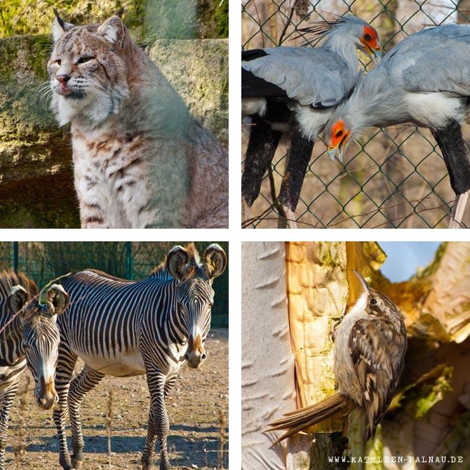 Impressionen aus dem Tierpark Berlin