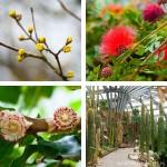 Impressionen aus dem Botanischen Garten