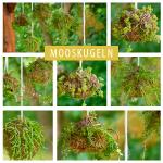 Kokedama: Mooskugeln als Hängende Gärten fürs Zuhause