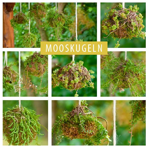 Kokedama aka Mooskugeln als Hängende Gärten