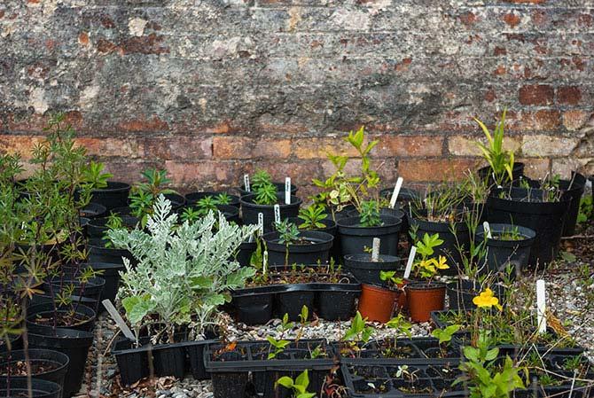 Pflanzenzucht im Klostergarten von Kylemore Abbey