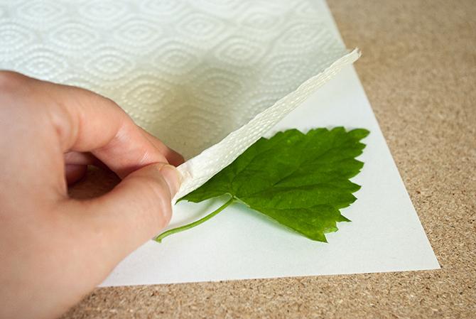 Schritt 2: Ein Laubblatt auf das Papier legen udn mit Küchenpapier abdecken