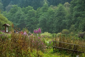 Der Kräuterpark Altenau inmitten von Wäldern