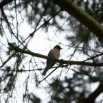 Stunde der Gartenvögel 2012