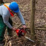 Ralf beim Holzsägen