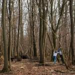 Von Holzfällern und Möpsen