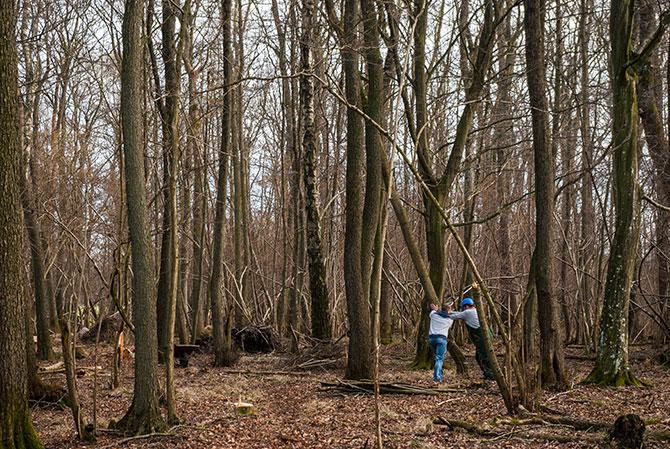Ralf und Julian beim Baumfällen