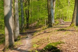 Weg im Sachsenwald